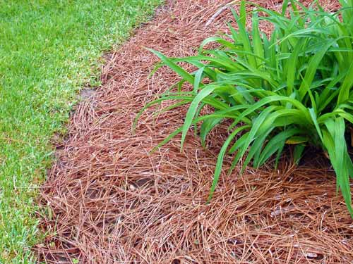 How and why do i mulch my garden Texture Plants