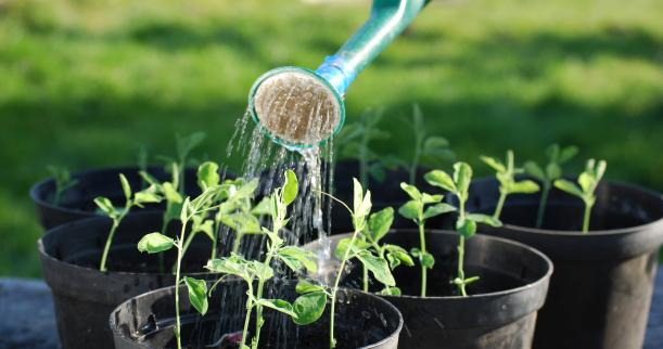 Image result for watering plants