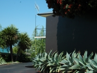 Agave'boutins blue'